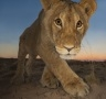 Hannes Lochner (South Africa) - Curiosity and the cat